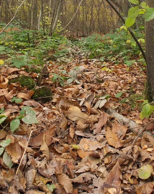 DSC_7570 Wild boar trail