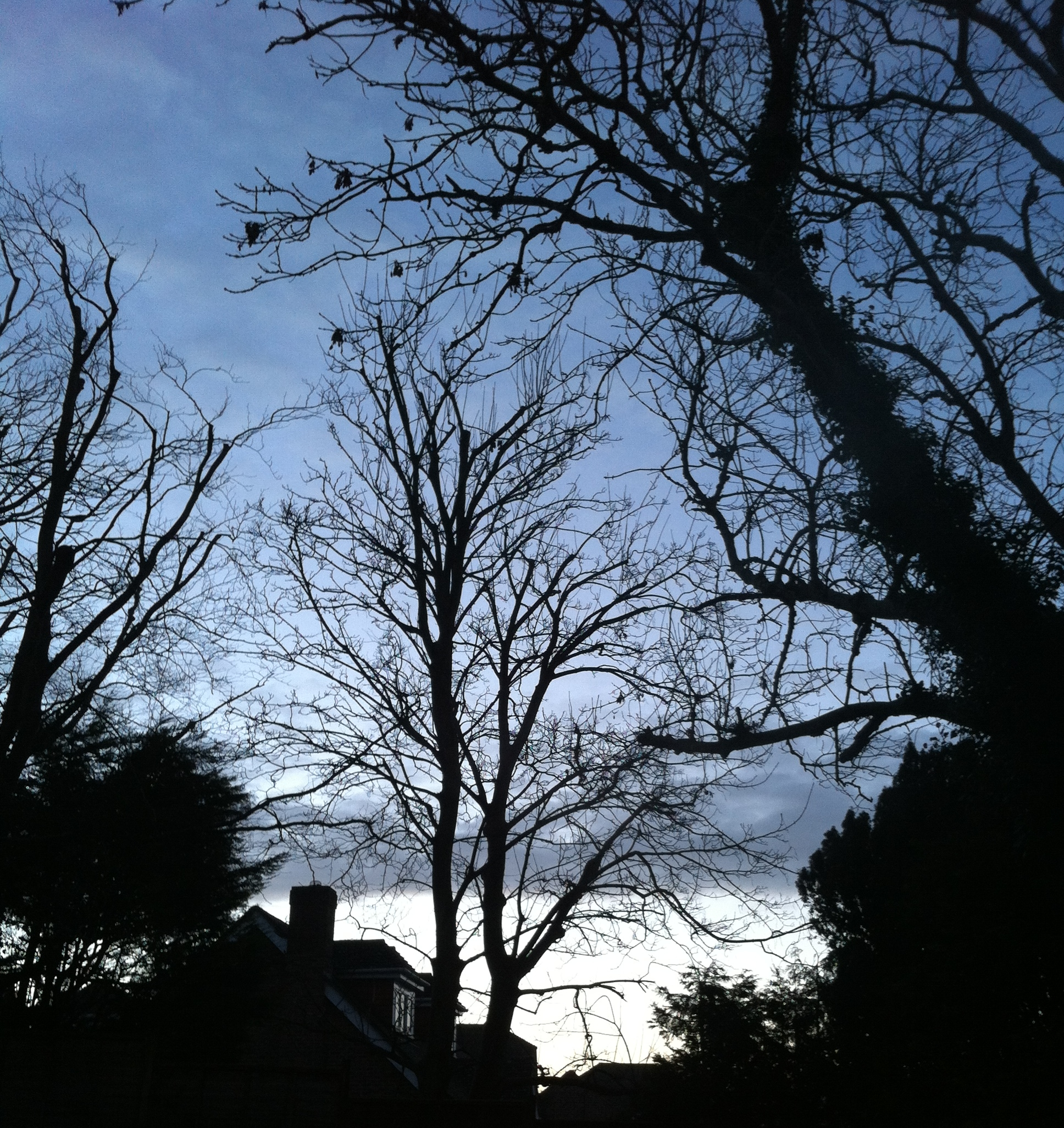chambray and curls bare branches and dusk sky in winter