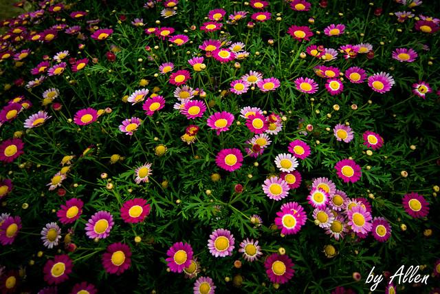 【一張流】可愛的小花花