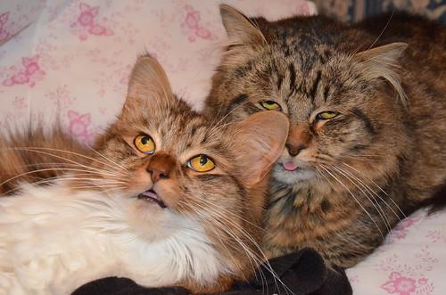 Valentines Cats