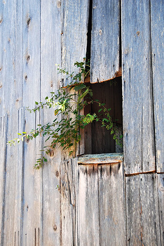 An Old Barn provides New Life in Ruckle Park, Saltspring Island, Gulf Islands National Park, British Columbia, Canada