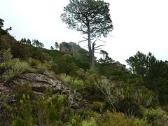 Le sentier de Sud Balardia : le versant de descente directe depuis le col 890m