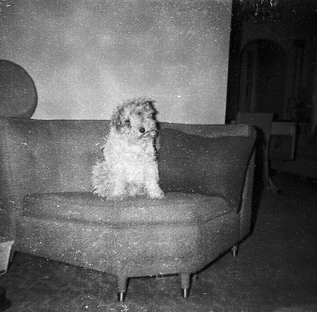 Found Film:  Dress-Up Dog