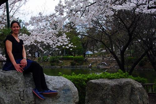 Tsurumai Koen Sakura 056r