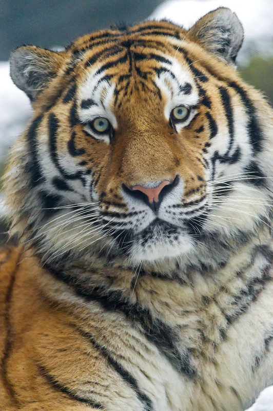 A nice portrait of Lailek