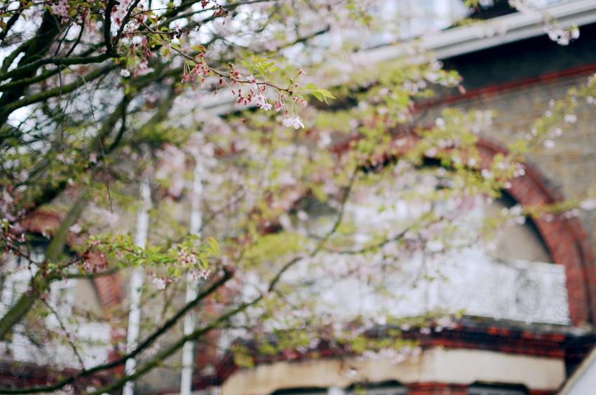 putney blossoms