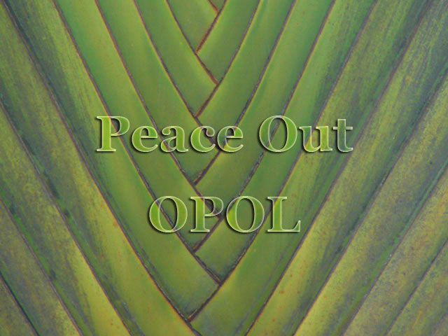 fan-palm-3-Peace-Out-OPOL