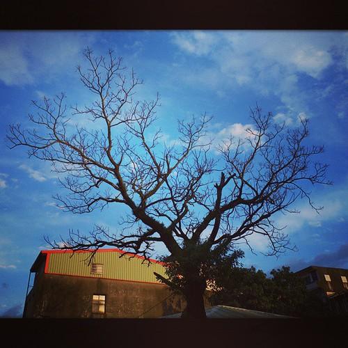 何時會再相見呢? 我想這是我們最近的距離。 遠遠一見到這樹就愛上了 , 繞了兩圈才發現由於冬季之故才能見得落葉之後樹梢的全貌。 對著像極愛心形狀的樹型深深著迷,落單地走在友人們身後。再回首時拍下這張照片。 #樹 #tree #love #winter #蘇澳