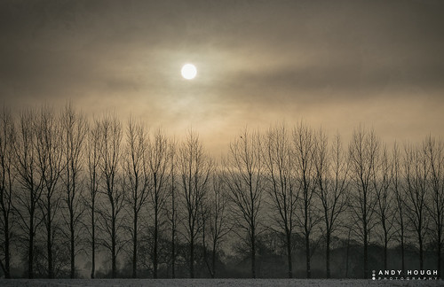 trees winter england sky sun clouds unitedkingdom sony dorchester a99 sonyalpha andyhough slta99v andyhoughphotography