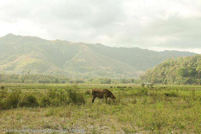 Indonesia - Sumba - Tarimbang - 14 - Horse on the savannah