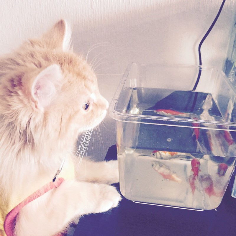 Why do we have to clean the goldfish if I could just eat them?