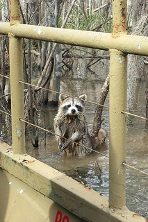 Pearl River Swamp 3