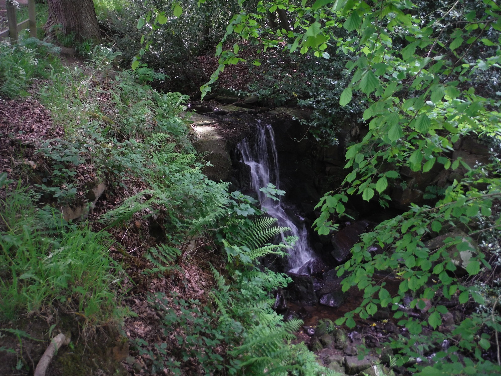 Waterfall on the Porter Brook SWC Walk 267 - Sheffield Circular (via Porter, Limb, Sheaf and Gleadless Valleys)