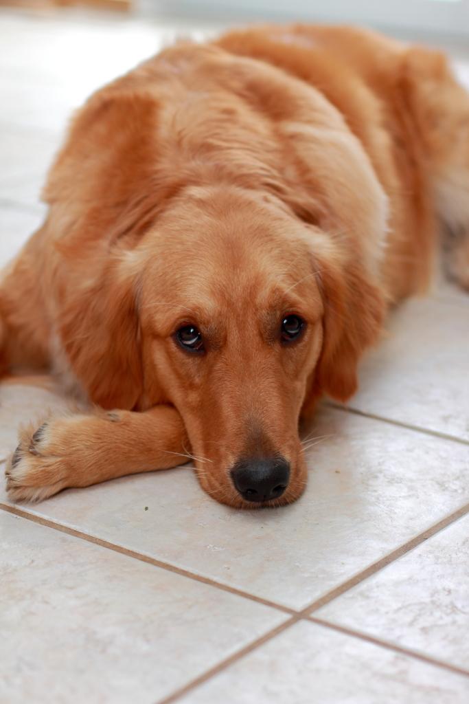 A cute Dog 2