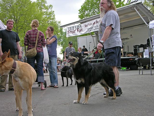 Judson Street Fest 2013 music dogs