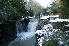 Winter 2013 (Jesmond Dene)  (4)