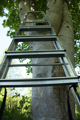 Ladder by Helen in Wales
