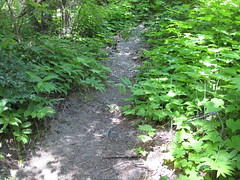 Trail off the trail