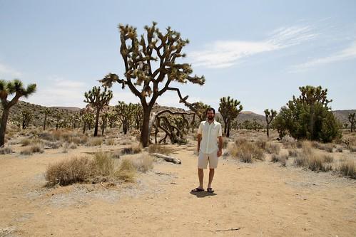 Joshua Tree National Park 2013