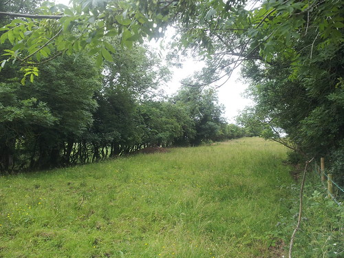 New photos added to Flickr July 2013, trackbed south of Comber