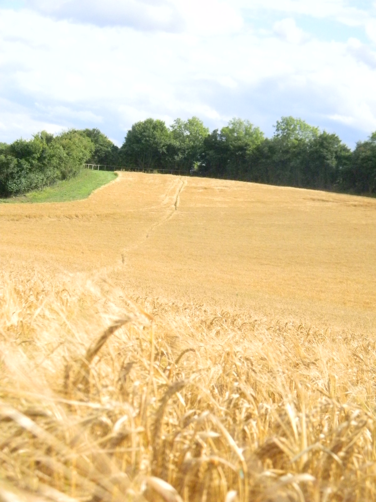 Path through Barley heading for Radnage Saunderton Circular via Bledlow