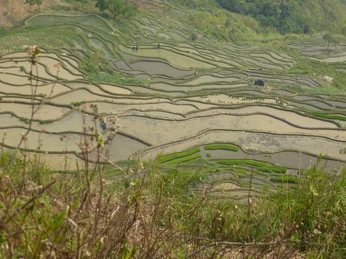 Yunnan13-Yuanyang 22 (3)