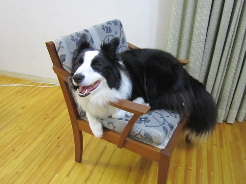 椅子に座るランディ 2013年10月5日20:22 by Poran111