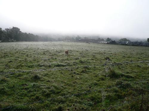 Aitch in the field