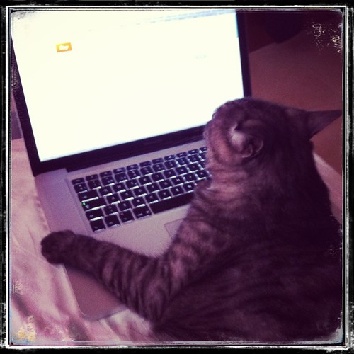 Working little furry assistant by Sparrow Little
