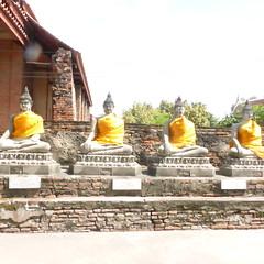 Profusão de Budas, todos vestidinhos de amarelo