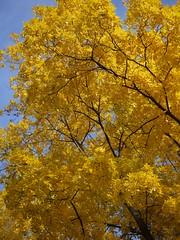 日, 2013-11-03 14:05 - Bronx Botanical Gardenの紅葉