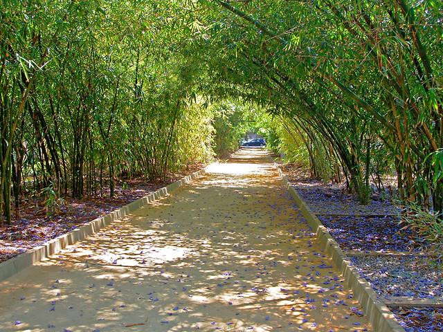 Bamboo tunnel, Parque Garcia Sanabria, Santa Cruz, Tenerife