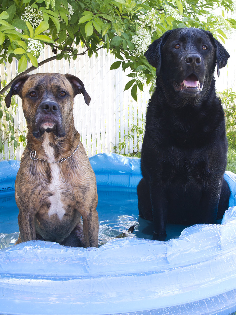 Perfect Puppies in the Pool