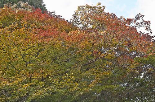【写真】2013 紅葉 : 日向大神宮/2020-10-05/IMGP3380