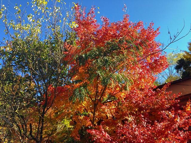 奥多摩は紅葉の季節