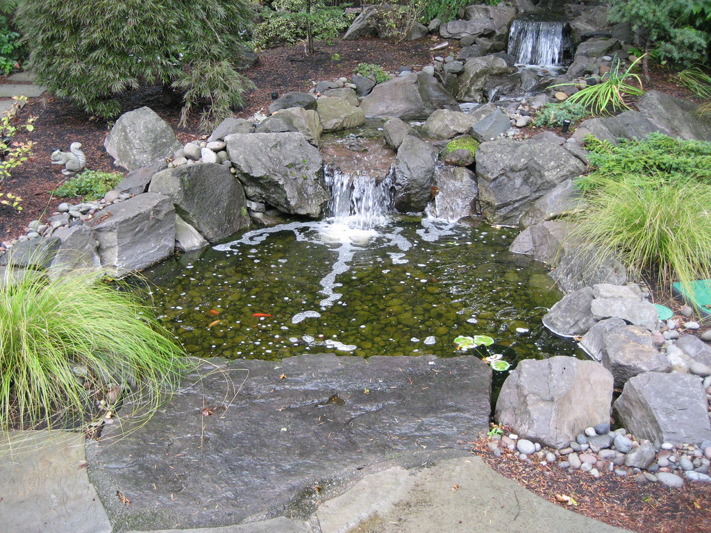koi fish ponds from greenhaven landscapes in vancouver