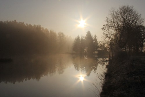 morning sun mist reflection tree sunrise germany pond village thuringia schackendorf