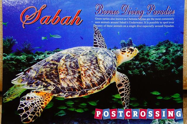 Sabah - Green Turtle