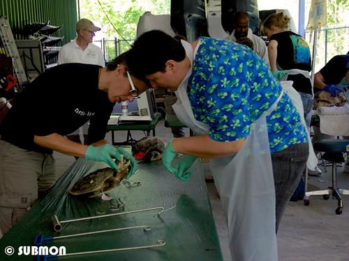 Sesiones prácticas durante el taller de medicina en el ISTS en Nueva Orleans