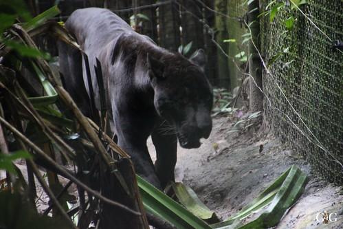 Zoo Karibikinsel Belize 19.11.2014 37