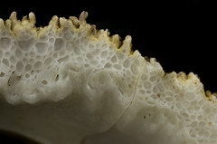 underneath a barnacle