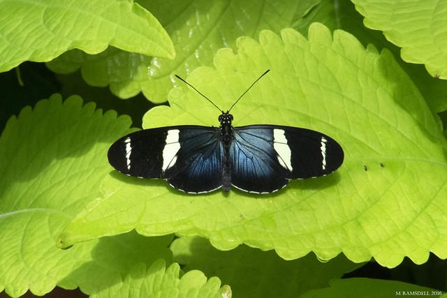 Butterfly 2016-71
