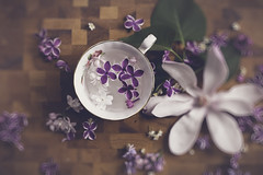 cup of spring