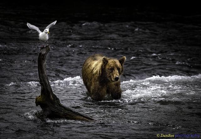Good Friends - Gull & Bear