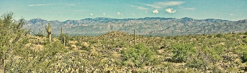 cactus nature cacti landscape sand desert scape sonorandesert catalinamountains
