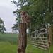 Tawny Owl by S.Hatch