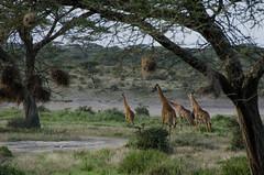 Tanzania-Masek-SafariDrive-140