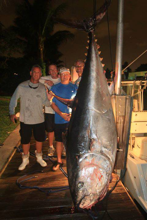 811 Pound Giant Bluefin Tuna.jpg