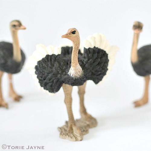 Schleich Ostriches
