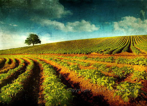 road county ireland field nikon down potato ie northern tamron textured 1024 d90 comber simplysuperb artistictreasurechest magicunicornverybest ringexcellence dblringexcellence tplringexcellence eltringexcellence ballyrainey